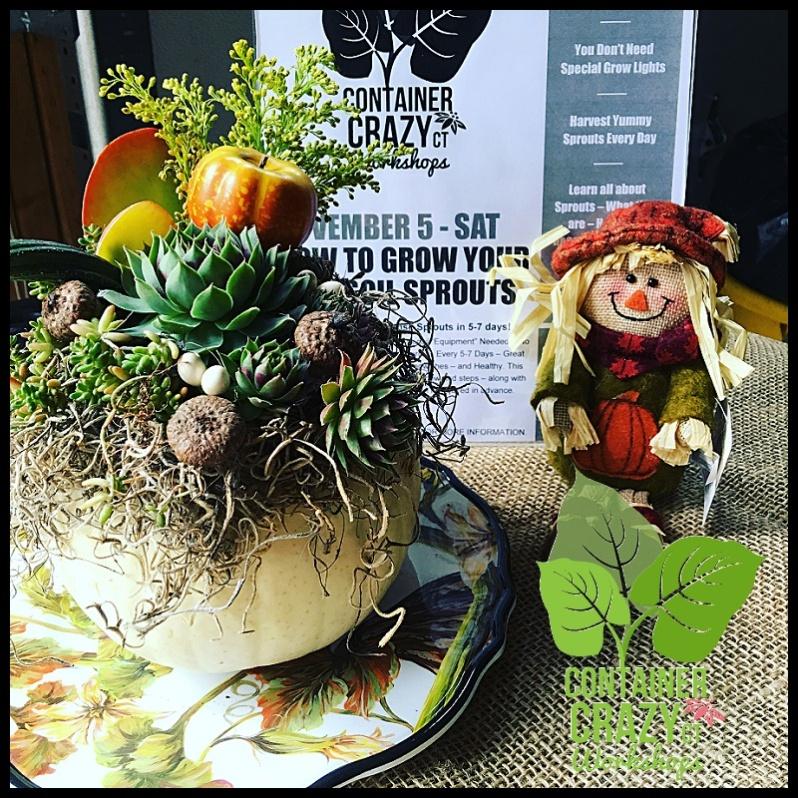 succulent-pumpkins_0004