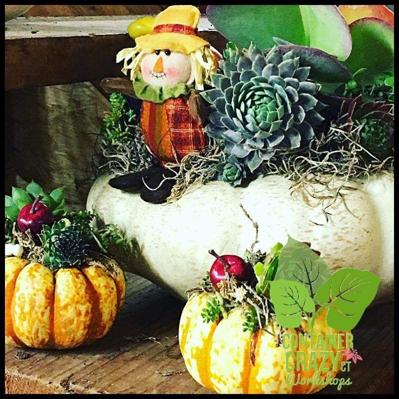 succulent-pumpkins_0007