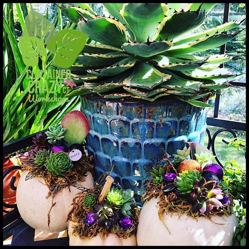 succulent-pumpkins_0023