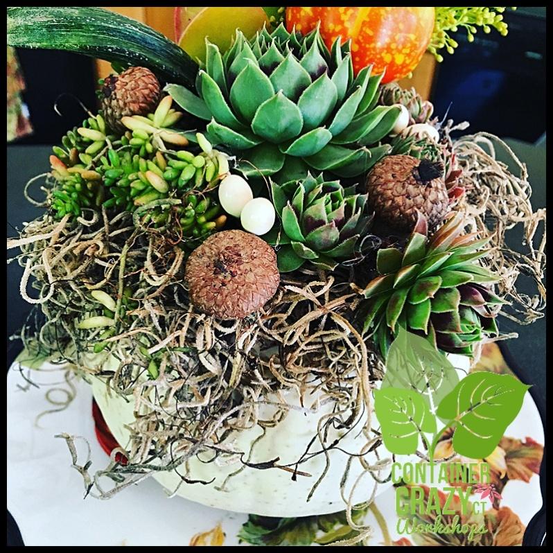 succulent-pumpkins_0003