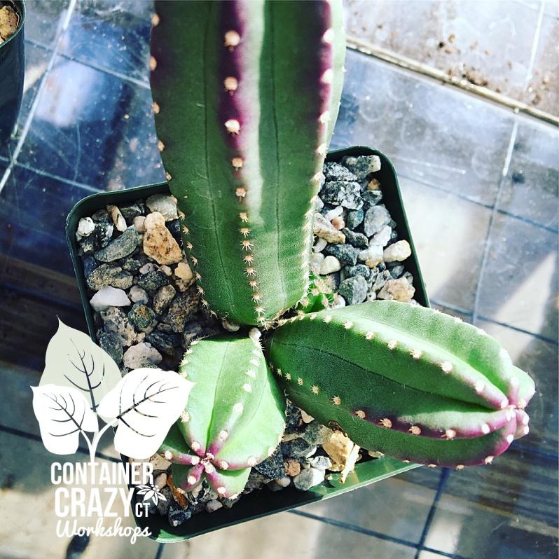 Cacti Copywrite CCC_0001