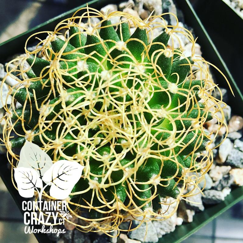 Cacti Copywrite CCC_0003