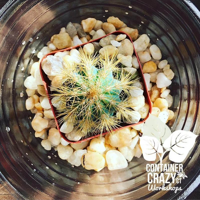 Cacti Copywrite CCC_0004