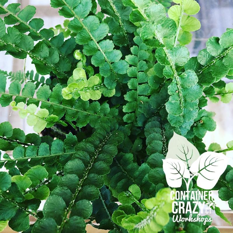 Cacti Copywrite CCC_0007