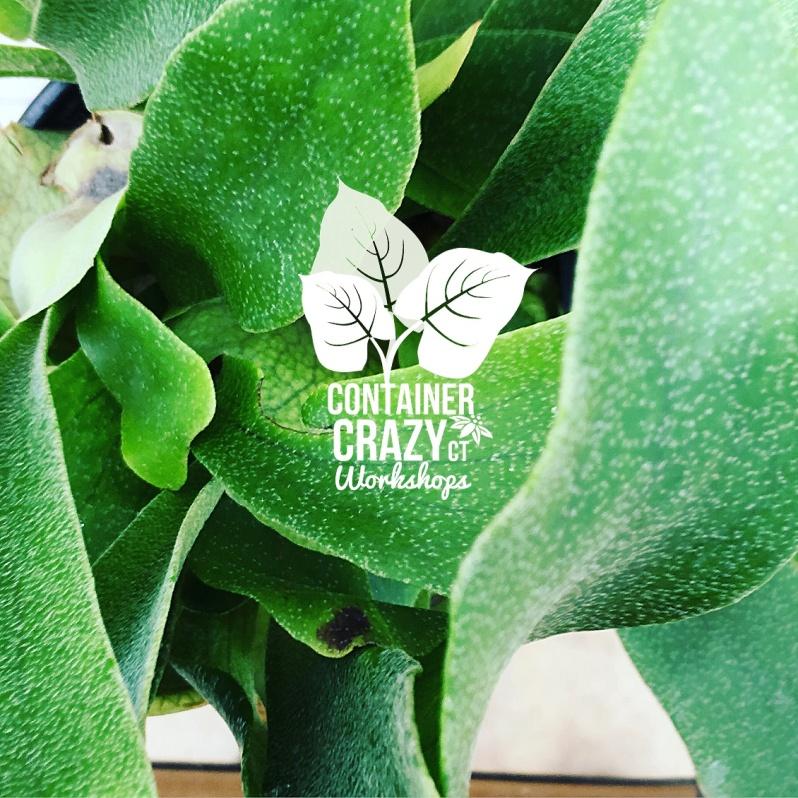 Cacti Copywrite CCC_0009
