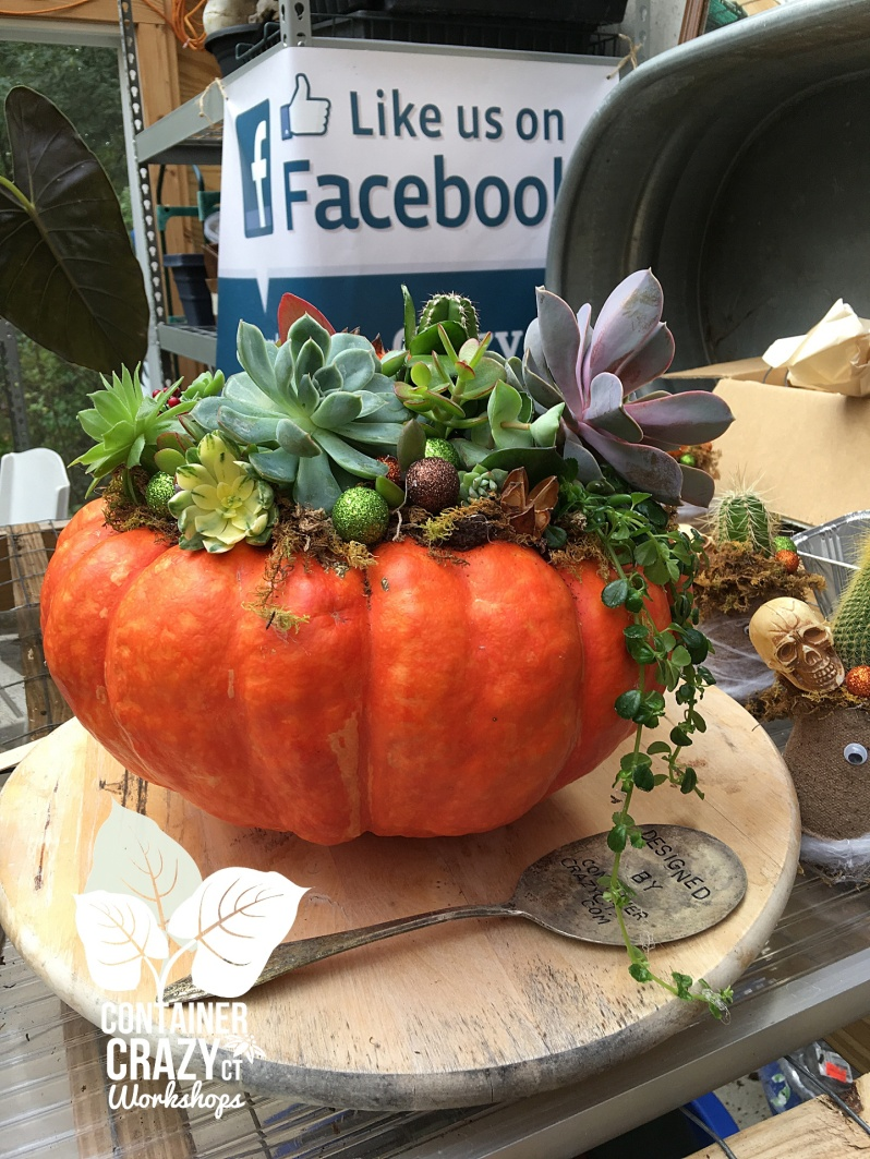 Succ Pumpkins copywrite Container Crazy CT_0002