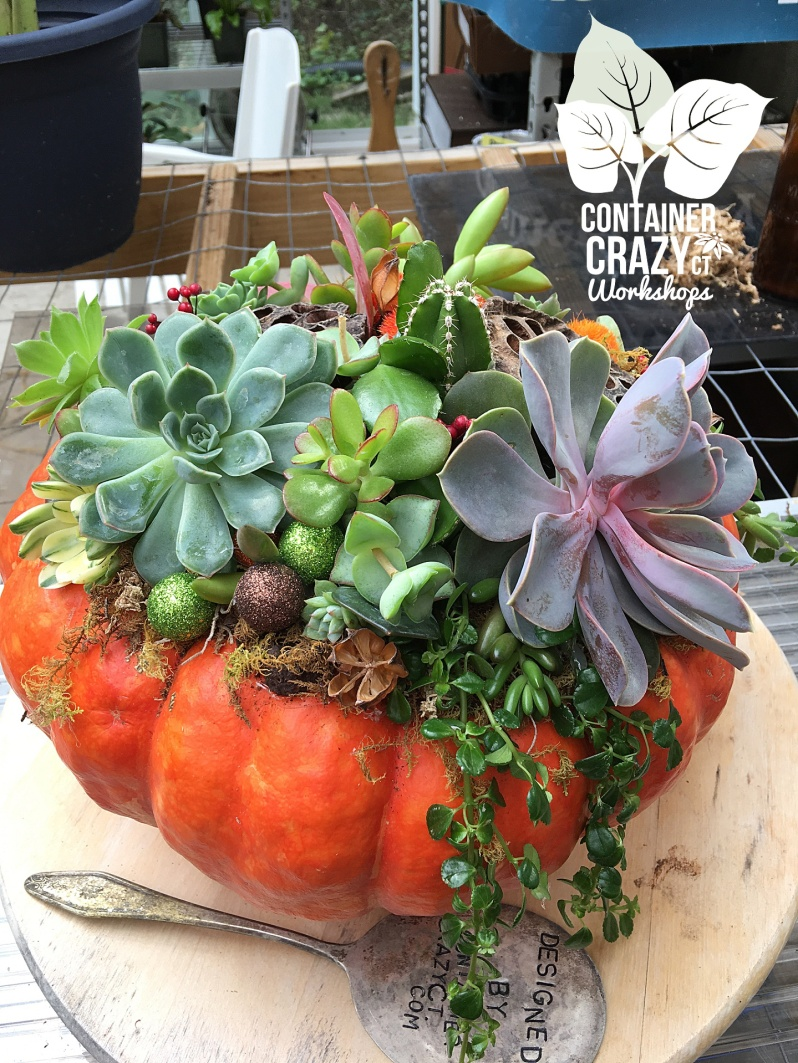 Succ Pumpkins copywrite Container Crazy CT_0003