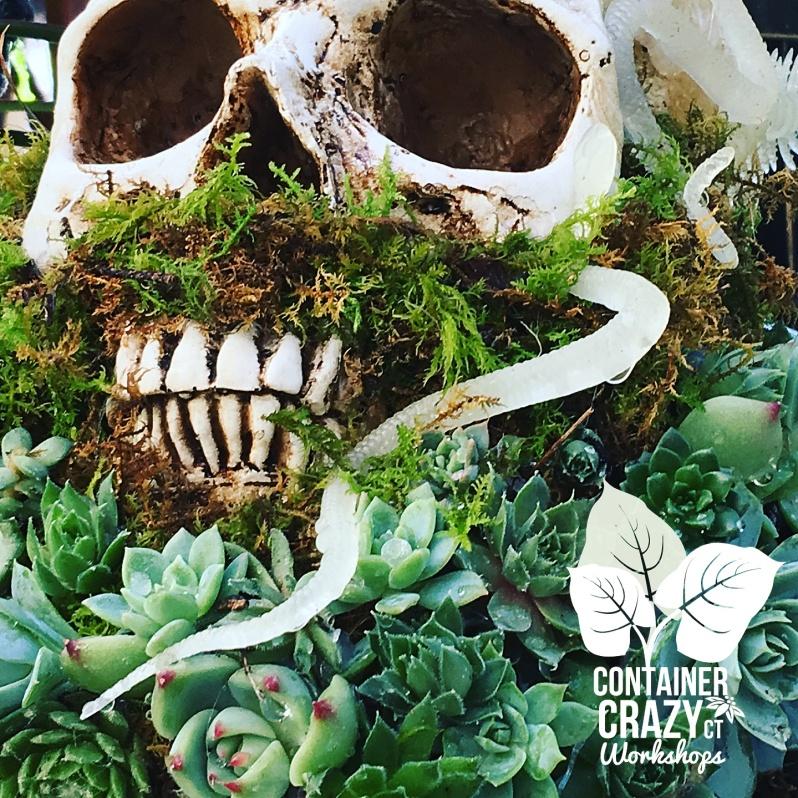 Skull Up close Container Crazy CT