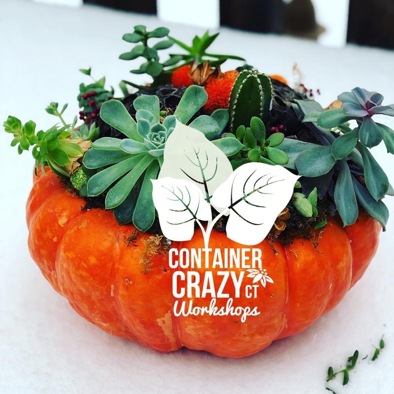 Succ Pumpkins 2018_0001