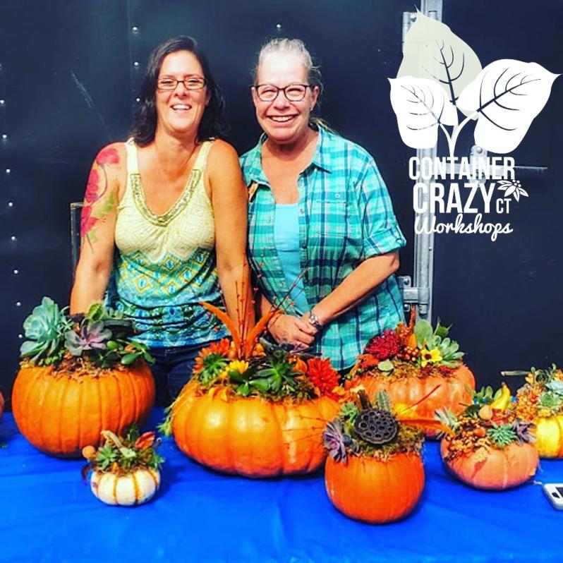 succ pumpkins Cathy Testa CCC Copywrite_0001