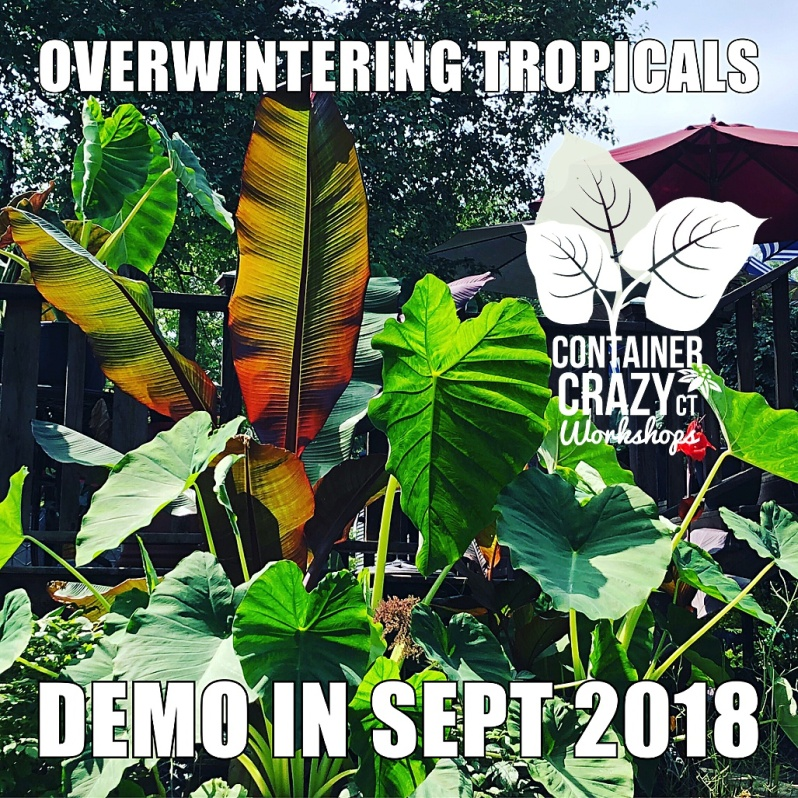tropical cont garden 2018_0008