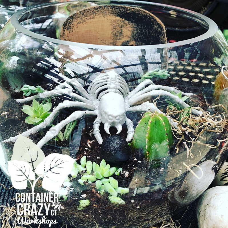 spooky terrarium copywrite photo C Testa_0002