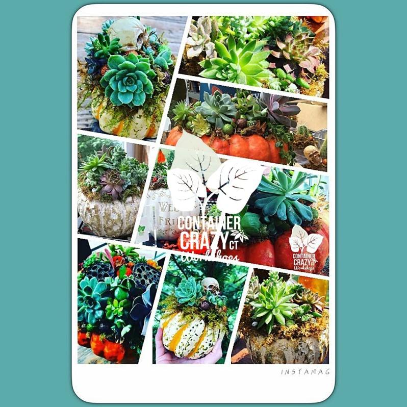 succulent pumpkins home_0002