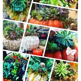 succulent pumpkins home_0003