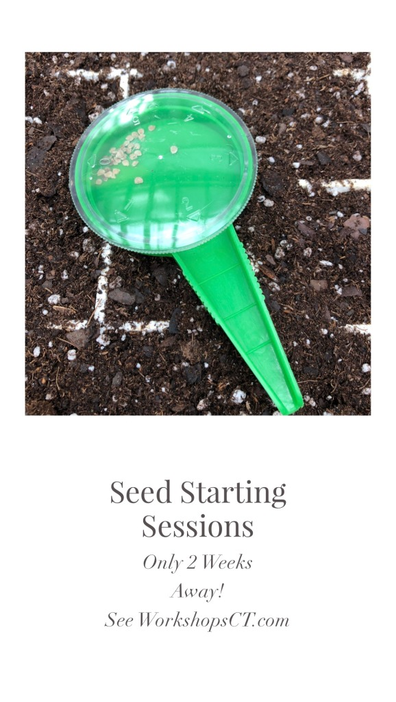 Over Photo Seed Starting