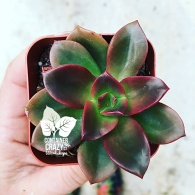 terrarium plants copywrite ccc_0004