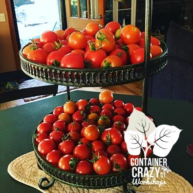 tomatoes cathy testa ccc copywrite_0002