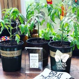STARTER GARDEN PLANTS C Testa Copywrite_0002