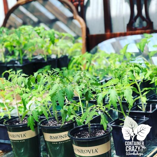 STARTER GARDEN PLANTS C Testa Copywrite_0003
