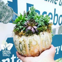 A Succulents Pumpkin C Testa Copywrite_0003