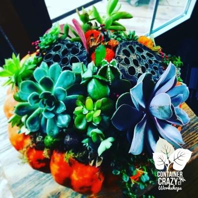 A Succulents Pumpkin C Testa Copywrite_0005