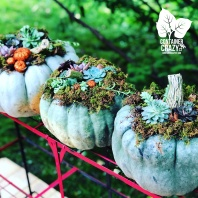 Custom Pumpkins by C Testa Copywrite_0004
