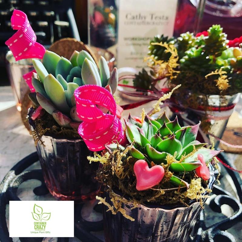 Valentines Plant Gifts C Testa Copywrite_0010