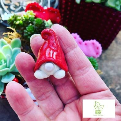 Valentines Plant Gifts C Testa Copywrite_0012